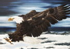 Dr. Jamil Alkhoury Picture An Eagle